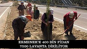 ERMENEK'E 400 BİN FİDAN 7500 LAVANTA DİKİLİYOR