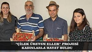 """""""ÇİLEK ÜRETEN ELLER"""" PROJESİ KADINLARLA HAYAT BULDU"""