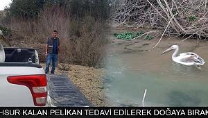 KARAMAN'DA MAHSUR KALAN PELİKAN TEDAVİ EDİLEREK DOĞAYA BIRAKILDI
