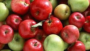 Elma Çalıştayı Karaman'da yarın yapılacak