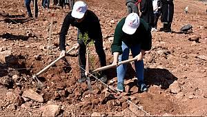 Yollarbaşı'nda 30 hektar arazi ağaçlandırılıyor