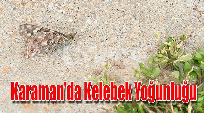Karaman'da kelebek yoğunluğu