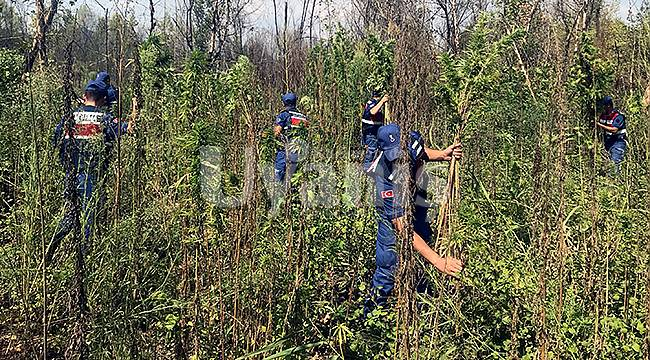 Karaman'da bin 13 kök kenevir ele geçirildi