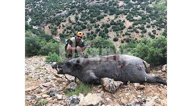 Yaban domuzu sürek avı düzenlendi