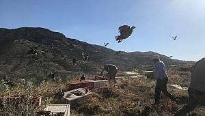 Karaman'da doğaya 2000 kınalı keklik salındı