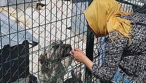 Karaman'da hayvanseverlerden barınağa ziyaret