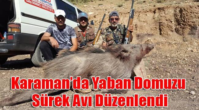 Karaman'da yaban domuzu sürek avı düzenlendi