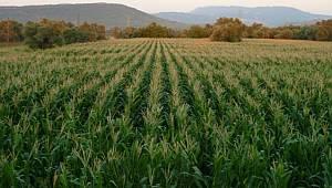 Karaman tarımı alarm veriyor