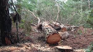 Kestiği ağacın altında kalan işçi öldü