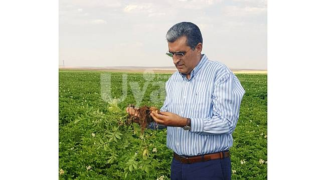 Patates Üreticilerine Hasat Öncesi Bakım Avansı