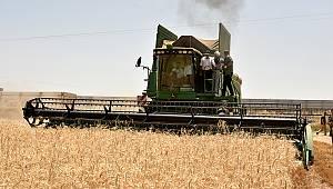 Vali Meral Buğday Hasadına Katıldı