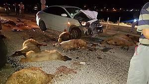 Otomobil koyun sürüsüne daldı