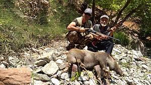 Yaban domuzuna geçit yok