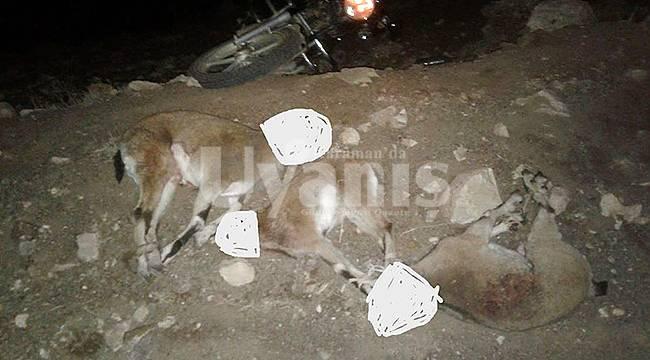 Karaman'da Yaban Keçilerini Öldürenlere Ceza