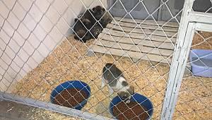 Ermenek'te sokak hayvanları için barınak yapıldı