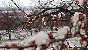 Karaman İçin yoğun kar yağışı ve zirai don uyarısı