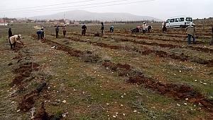 Karalgazi Köyünde 11 bin fidan toprakla buluşturdu