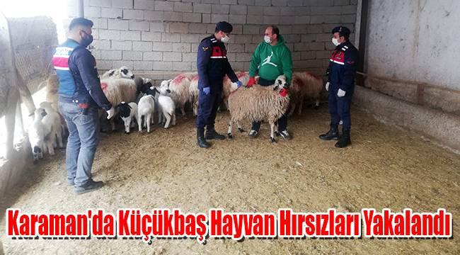 Karaman'da Küçükbaş Hayvan Hırsızları Yakalandı