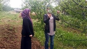 Karaman'da elma bahçeleri için seferberlik başladı