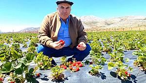 Karaman İklim Olarak Çilek Yetiştirmek İçin Çok Uygun