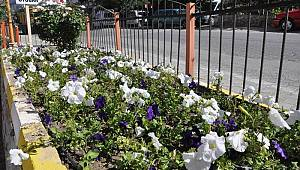Ermenek'te çiçek dikim çalışmaları gerçekleştiriliyor