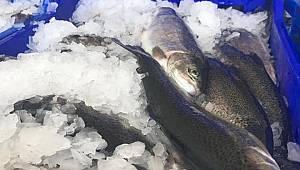 Karaman'dan Japonya'ya balık ihracatı