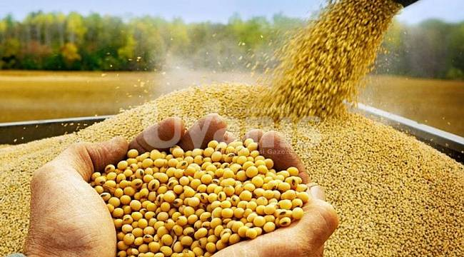 Yağlı tohumlar desteği ödemeleri hesaplara yatıyor