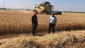 İl Tarım ve Orman Müdürü Şahinbaş buğday hasadına katıldı