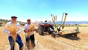 Karaman'da buğdaylar biçilmeye devam ediyor