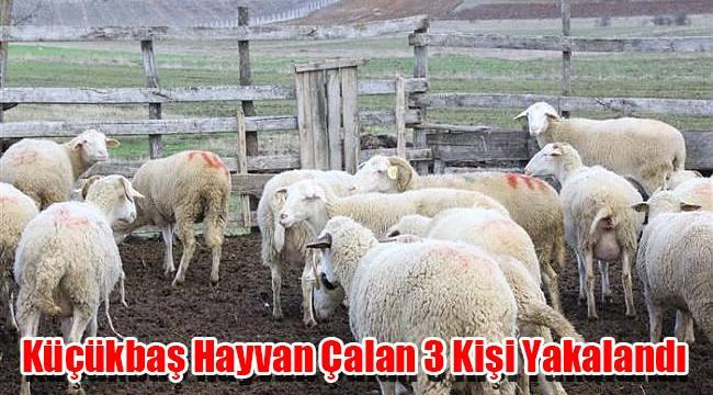 Karaman'da Küçükbaş Hayvan Çalan 3 Kişi Yakalandı