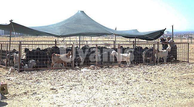 Karaman'da kurbanlıklar pazara çıktı