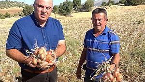 Karaman'da soğan hasadı başladı