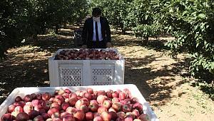 Kaymakam Çıkrık, Elma Hasadına Katıldı