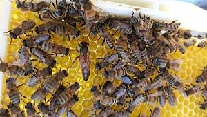 Arılı kovan ve damızlık ana arı desteğinin şartları değiştirildi ve başvuru süresi uzatıldı