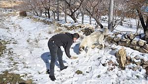 Ermenek Belediyesi Sokak Hayvanlarını Unutmadı