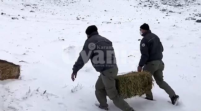 Karadağ'daki yaban hayvanları için yem takviyesi yapıldı