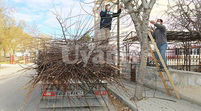 Karaman'da budanan dallar geri dönüşüme kazandırılıyor
