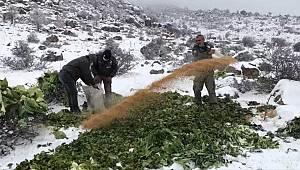 Karaman'da yaban hayvanları için yem takviyesi yapıldı