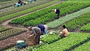 MEVKA'dan organik tarım alanlarının genişletilmesine destek