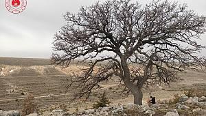 İsmail Hacı Tekkesi'ndeki Meşeler Anıt Ağaç Olarak Tescillenecek
