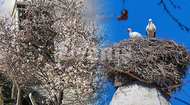 Karaman'da ağaçlar çiçek açtı, baharın müjdecisi leylekler geldi