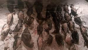 Karaman'da kaçak avlananlara 198 bin lira ceza kesildi