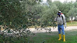 Tarım Müdürlüğü, Üreticiyi Meyve Ağaçlarını Hastalıklara Karşı Bordo Bulamacı Yapılması Konusunda Uyardı