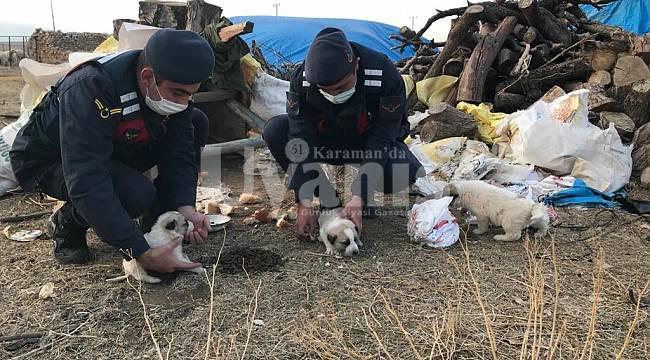 Jandarma Ve Polis Ekipleri Sokak Hayvanlarını Besledi