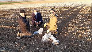 Karaman'a En Uygun Nohut Ve Yeşil Mercimek Çeşitlerinin Belirlenmesi İçin Deneme Ekimi Yapıldı