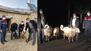 Karaman'da hayvan hırsızları jandarmadan kaçamadı