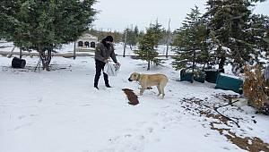 Karaman'da Sokak Hayvanları Unutulmadı
