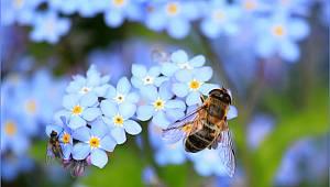 Tarım Müdürlüğünden ilaçlama ile arı ölümlerine karşı uyarı