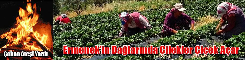 Ermenek'in Dağlarında Çilekler Çiçek Açar