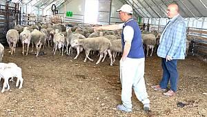 Süt Üreticisi Sıkıntılı Günler Geçiriyor